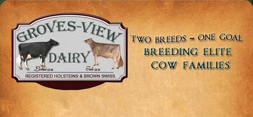 Groves View Dairy Brown Swiss and Holsteins
